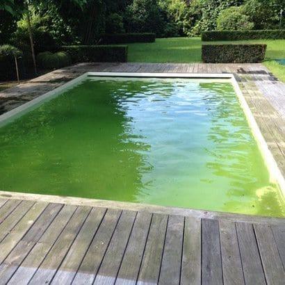 piscine verte