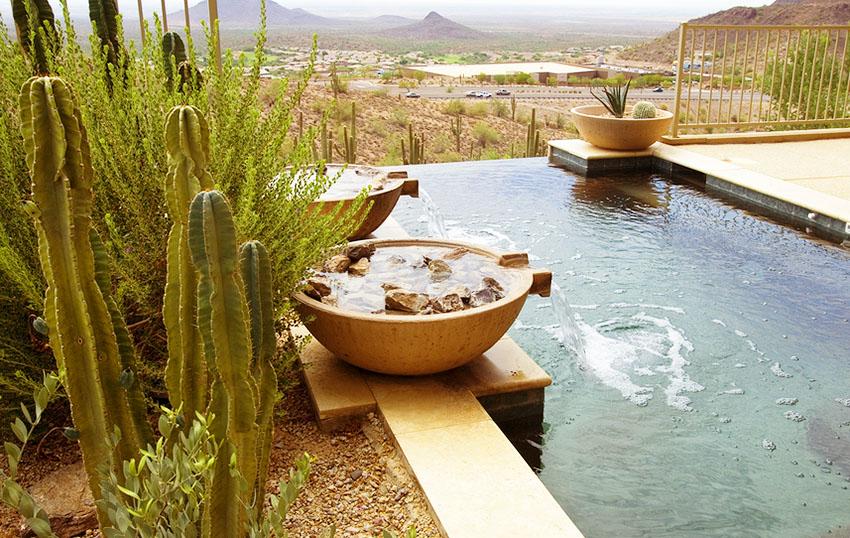Cactus au bord d'une piscine